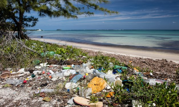 New toxic time bomb: Contaminants in marine plastic pollution